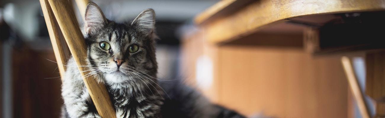 MetLife Pet Insurance Review