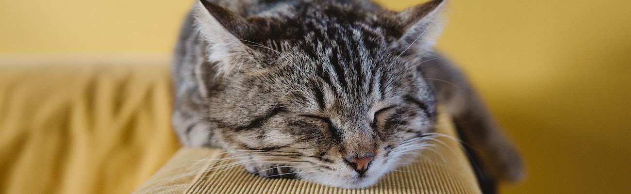 ASPCA Pet Insurance Review