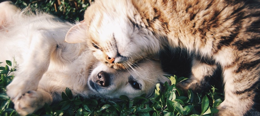 How much are dog and cat owners willing to spend on their companions