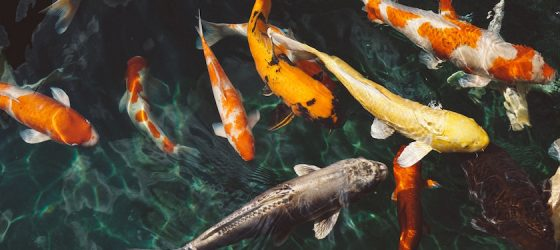Personal Loans for Fish Tanks