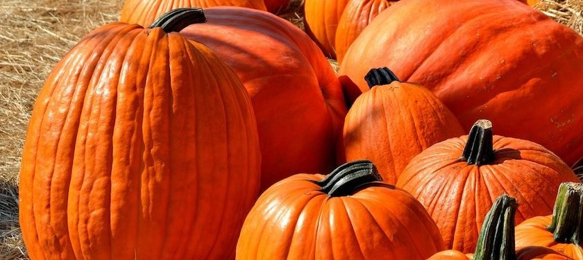 Trick or Treat How much does the average american spend on halloween