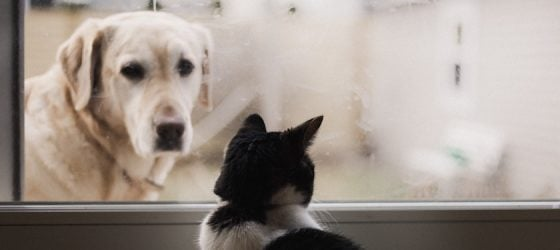Should You Get Pet Insurance After Adopting a Dog or Cat?