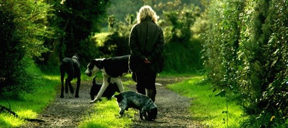 AARP Pet Insurance Discount