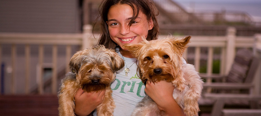 Wellness Plans vs. Pet Insurance