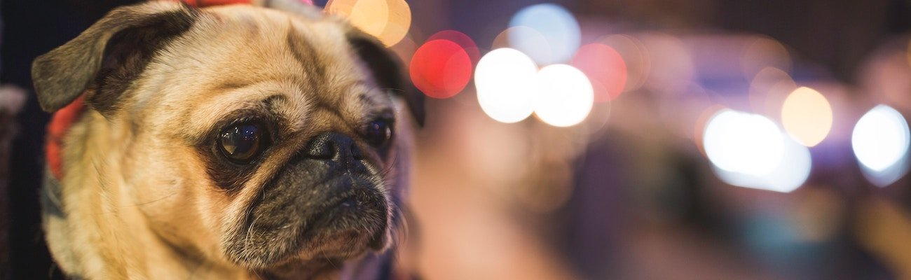 Eusoh Pet Insurance Alterantive Review
