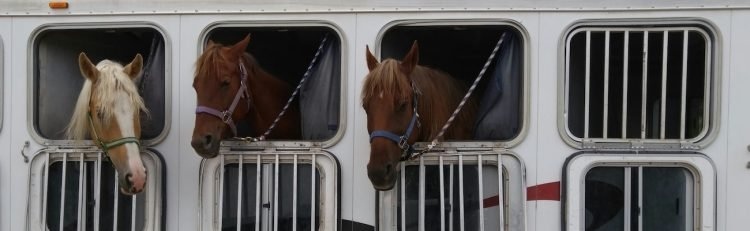 Horse Trailer Financing: How and Where to Secure Funding