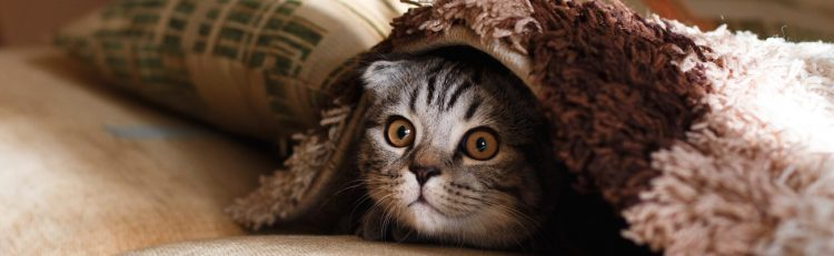 Wagmo Review: Pet Wellness Plans