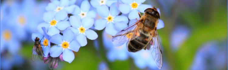 scholarship bee