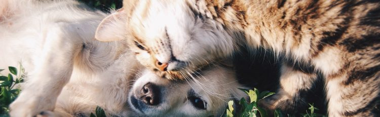 A cat and dog laying together