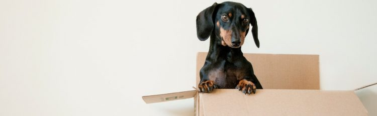 A dog standing in a box