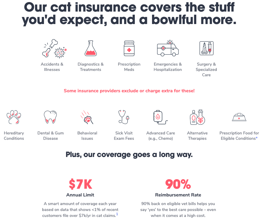 Pumpkin Cat Insurance Coverage