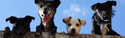 Is Pet Insurance Worth It? New Data Reveals Monthly Cost by Species, Breed, & State